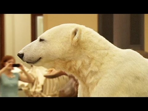 Everlasting Knut: famous bear moves to Natural History Museum - no comment
