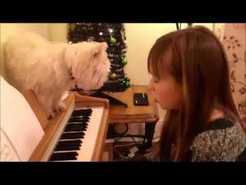 Make you feel my love Connie Talbot for Minty Boy