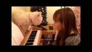 Baixar Make you feel my love Connie Talbot for Minty Boy