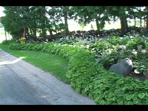 Hosta Planting Instructions How To Plant Hosta Step By Step Planting