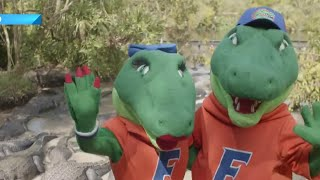 Gator Mascot School List