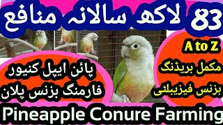 Green Cheek Conure Farming A to Z Business Plan in Hindi. Pineapple Conure Farming & Breeding Cages