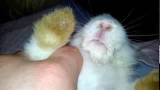 Лечение мокрой морды у кроликов