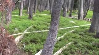 Bigfoot, Sasquatch WORLD  ON CAMERA 6:14 lower left you will see a real Bigfoot  12:53 white head