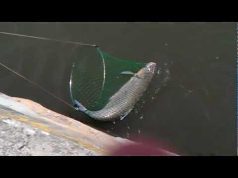 чем ловят рыбу в ростове на дону