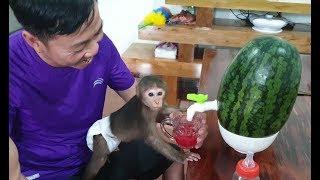 Baby Monkey | Monkey Doo And Family Enjoy Yummy Juice With Watermelon