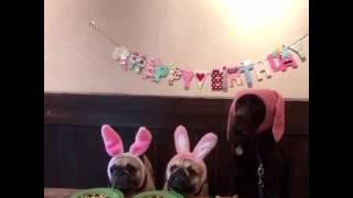 Прикол во времени день рождение собаки