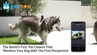 PetNow: Wearable Smart Pet Camera for Dogs