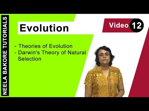 Evolution - Theories of Evolution - Darwin's Theory of Natural Selection