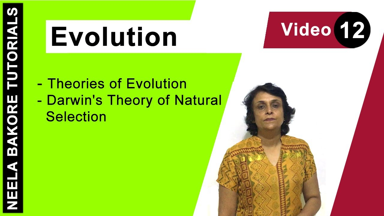darwin the theory of natural Charles darwin, in his theory of natural selection, said evolution must be a very  slow process so how did flowering plants develop so quickly.