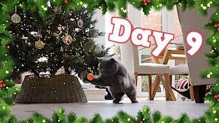 CRAZY CHRISTMAS CAT PING PONG!   VLOGMAS DAY 9 - CHRIS & EVE