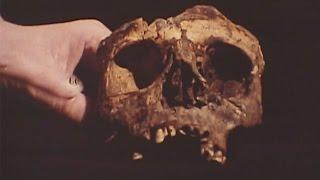 بالفيديو.. فريق ألماني يفحصون مومياء فرعونية.. شاهد ماذا وجدوا ؟!