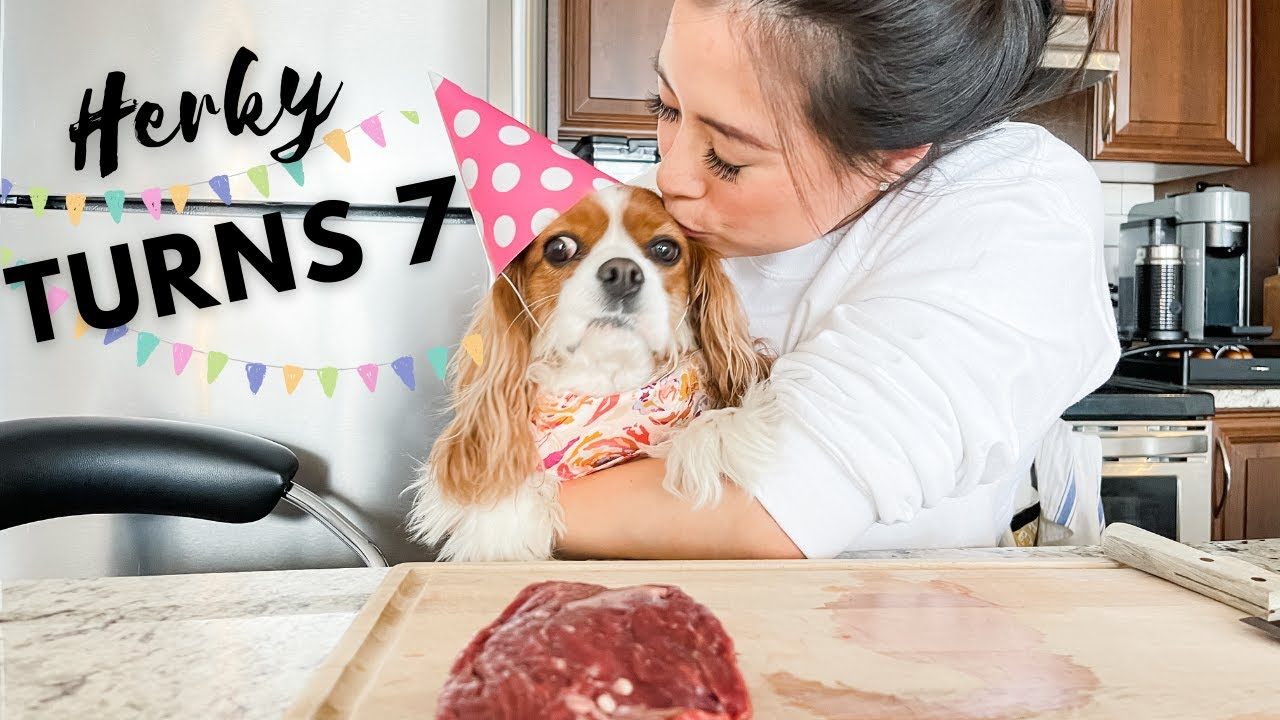 HERKY TURNS 7 // Making My Dog a Birthday Meal