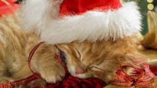♫ Douce Berceuse de Noël Pour Endormir Bébé ♫ Dulce Canción de Cuna de Navidad Para Bebé ♫ 3Hrs