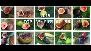 Top 15 Fig Varieties in 2019 - AZ 9B