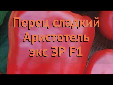 Перец сладкий Аристотель экс ЗР F1 �� обзор: как сажать, семена перца Аристотель экс ЗР F1