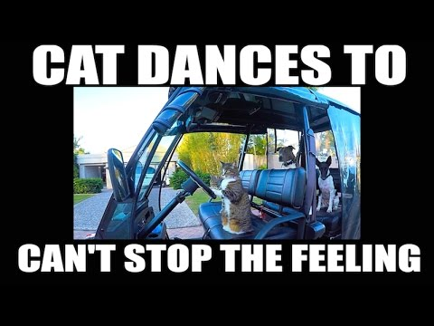 CAN'T STOP THE FEELING - Justin Timberlake - CAT dancing version