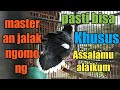 Masteran Jalak Ngomong Assalamu Alaikum  Mp3 - Mp4 Download