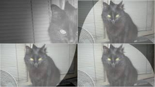 Pussy Cat Song + Lyrics