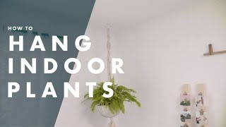 How To Hang Indoor Plants From the Ceiling