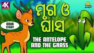 ମୃଗ ଓ ଘାସ | The Antelope and The Grass in Odia | Odia Story | Fairy Tales in Odia | Koo Koo TV Odia