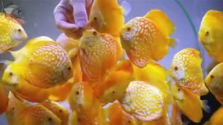Что нужно знать о запуске аквариума. Советы новичкам. Секреты аквариумиста
