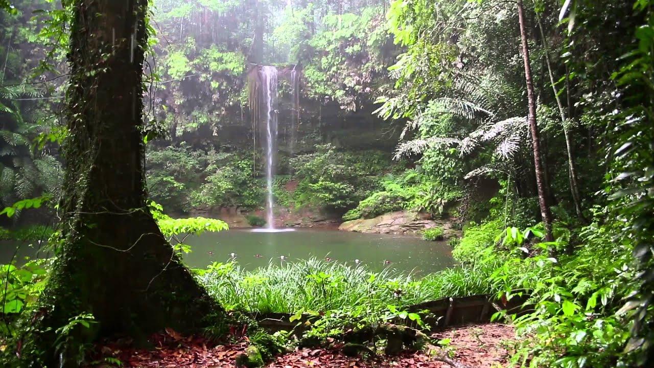 Sonido De Lluvia Y Los Animales Del Bosque Hd Lluvia Relajarse