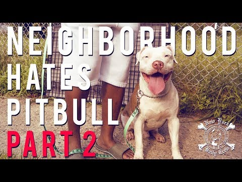 Neighborhood Hates Pitbull Part 2 | New York Bully Crew