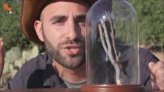 Download Video ♂STUNG by a Tarantula Hawk Right Version ♂ MP3 3GP MP4