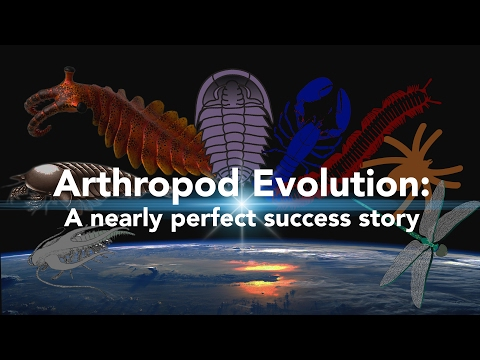 Arthropod Evolution: A nearly perfect success story