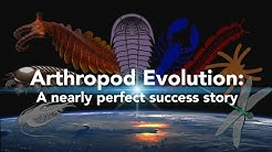 Arthropod Evolution: A nearly perfect success story