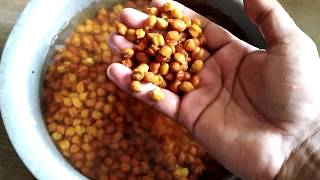 Goat feed | Chana for Goats | Apna Goat Farms