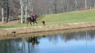 Rocky Mountain Horse And German Shepherd Dog With Pond Reflection