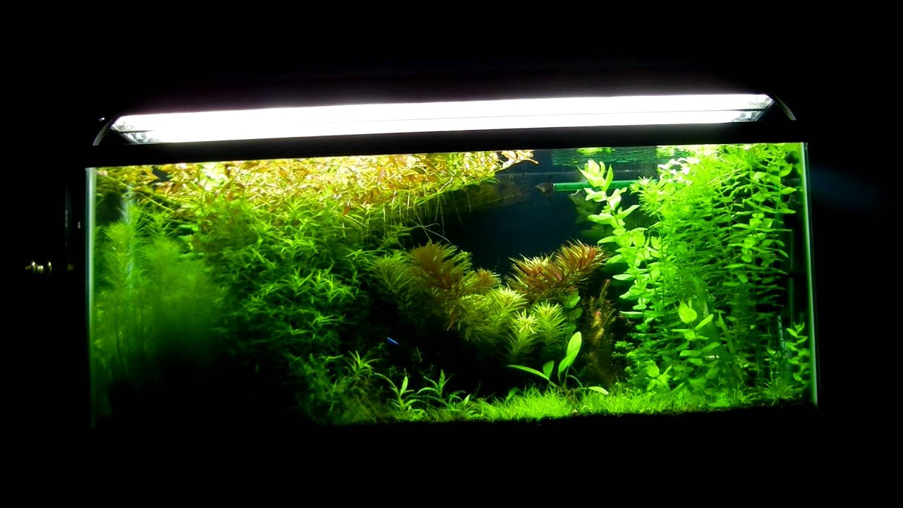 55 gallon planted aquarium youtube for 55 gallon fish tank for sale
