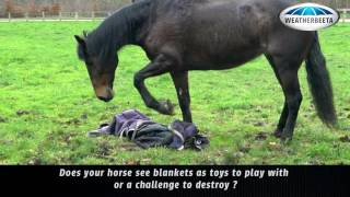 Cute Horse Turnout Blankets