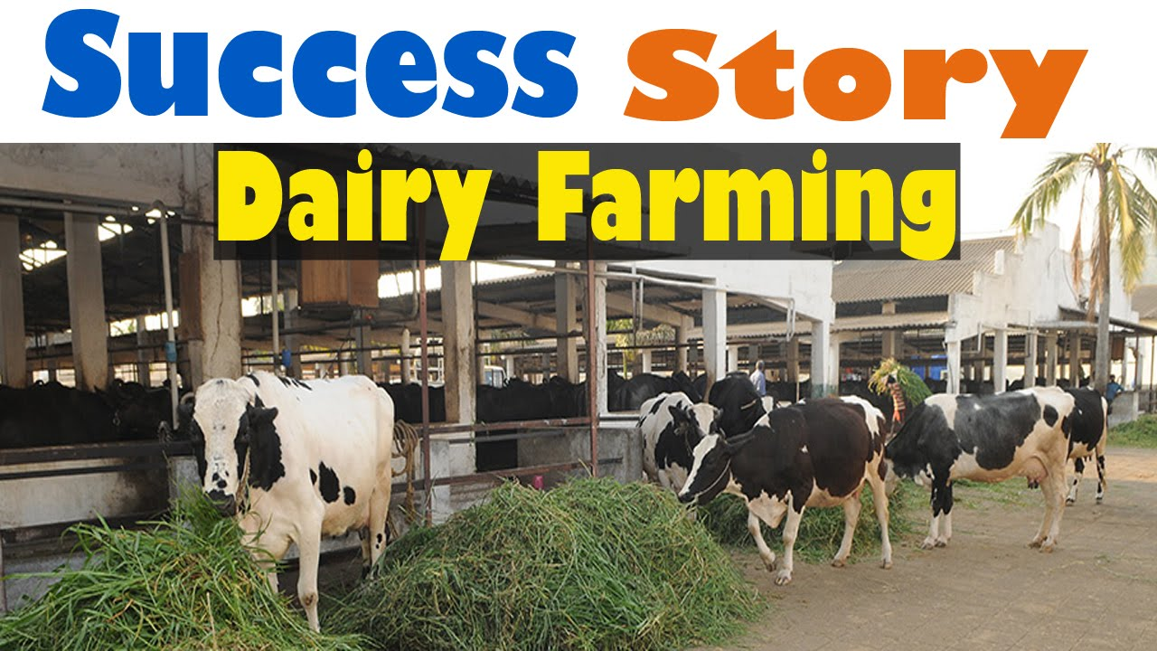 dairy farm project report