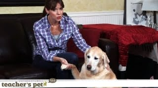 Keep A Dog Calm During Thunderstorms | Teacher's Pet With Victoria Stilwell