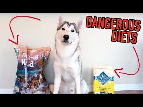 Are Grain-Free Diets Killing Siberian Huskies?