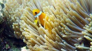 Maldive - I Pesci e la  barriera corallina