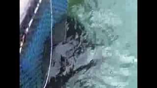 Zaiste Malezja: odcinek 22: Potwory głębinowe