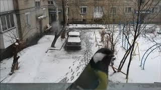 СНЕГ на ЗЕМЛЮ, птицы на подоконник! С первым снегом!
