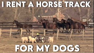 Never seen before | WooFDriver's Huskies Exercising at a Horse Track as Horses get excited