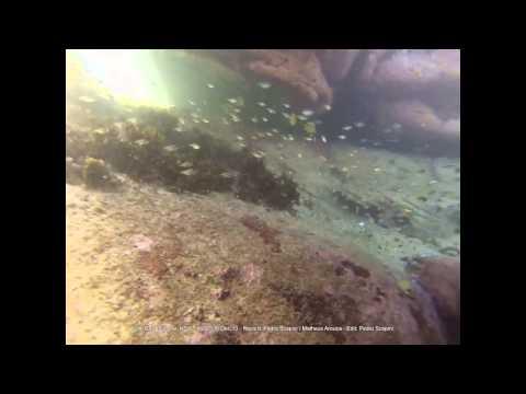 Snorkel Little Bay, Malabar, Sydney - 06/Dec/2013