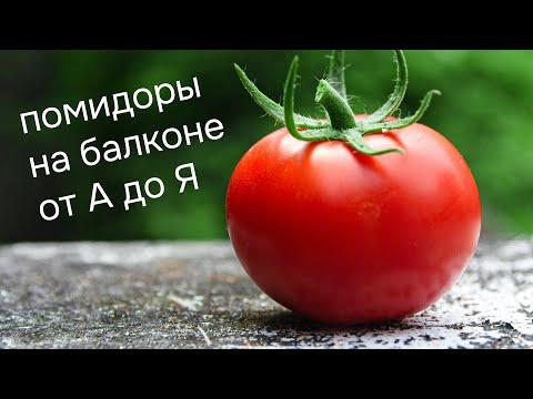 Как вырастить помидоры на балконе? Огород на подоконнике и выращивание томатов Черри