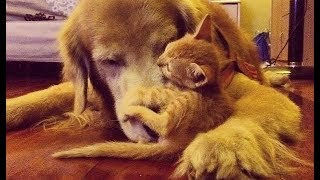 保護した子猫を連れて帰ると、犬をお母さんだと思い込んで可愛いことに...