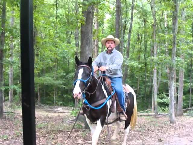 Ollie & Horses vet check  July 2012 048