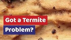 Termite Inspections In San Luis Obispo