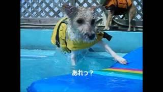 去年の夏の映像です、泳ぎは得意なんですが。