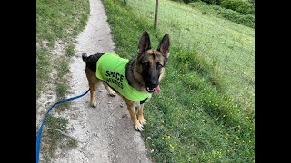 Anni the German Shepherd - 4 Weeks Residential Dog Training