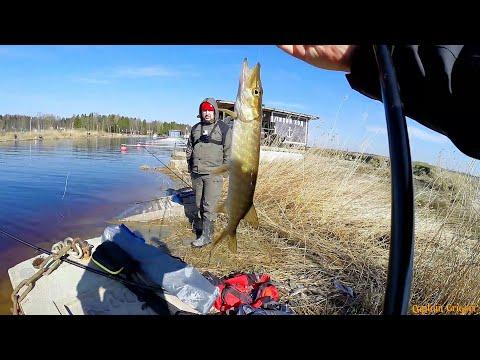 Весенняя рыбалка на Ладожском озере, Густера, Плотва, Окунь, Щука